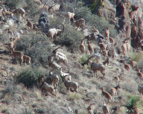 mexico report new hunting